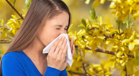 Hay Fever Sufferers Pick the Wrong Meds for Sneezin' Season