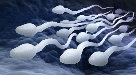 New Hope for Male Fertility in Young Cancer Patients