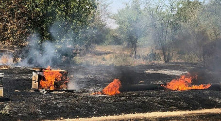Fire Kites Sting Negev Honey Farms Just Before Rosh Hashanah