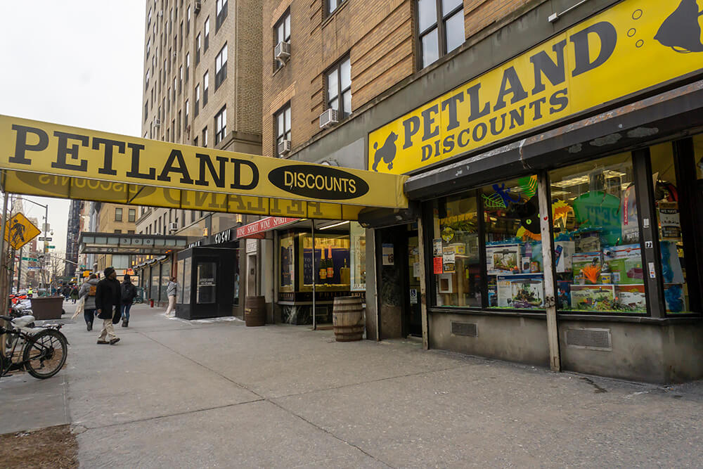 """NYC Locations of """"Petland Discounts"""" Clinging to Stay Afloat"""
